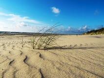 Grass on the beach of the Baltic Sea Stock Photos