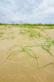 The grass on beach. Royalty Free Stock Images