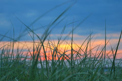 Grass on beach in front of sunset stock photography