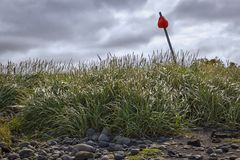 Grass on the beach of the peninsula Tjörnes, Iceland Royalty Free Stock Image