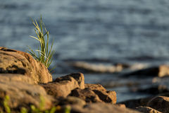 Grass on the beach, sea in background. Green grass on brown rocks in the sunlight, blue sea in the background Stock Photography