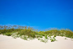 Grass on a beach during stormy season Stock Images