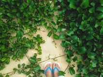 Grass on the beach. Under your foot Stock Photography