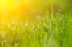 Grass and beatiful bokeh Royalty Free Stock Images