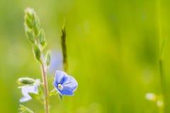 Grass. Beautiful green grass field close-up photo Stock Photography