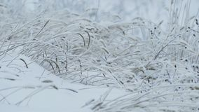 Grass beautiful ice snow frozen winter pretty stock footage