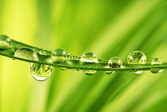 Grass and beautiful water drops Royalty Free Stock Image