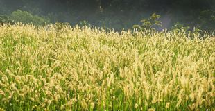 Grass beauty royalty free stock photo