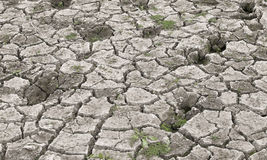 Grass begin to grow after rain on dried land Stock Photos