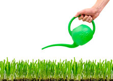 Grass being watered with watering can Stock Image