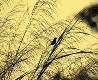 Grass with bird. Sunset through grass with bird Stock Photos