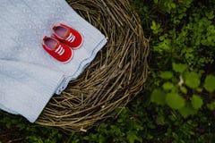 Grass, Bird Nest, Tree Stock Photography