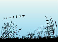 Grass and birds vector Stock Images