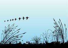 Grass and birds vector stock illustration