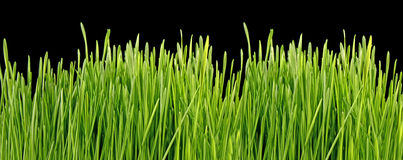 Grass on black Royalty Free Stock Photography