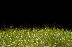 Grass on a black background. Green grass with moisture on a black background Stock Photos
