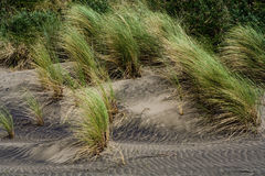 Grass in black sand. In Karekare Stock Image