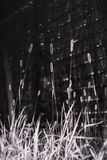 Grass in black and white Stock Photos