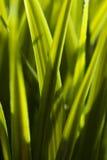 Grass Blade Stock Image