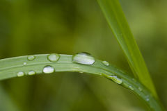 Grass Blade Stock Images
