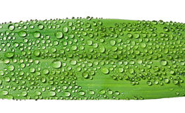 Grass-blade with dew 1 Royalty Free Stock Photos