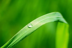 Grass blade with drop Royalty Free Stock Photography