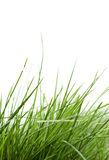 Grass blade in the wind Stock Photos