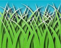 Grass blades Royalty Free Stock Photography