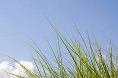 Grass blades Stock Photos