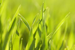 Grass blades Stock Images