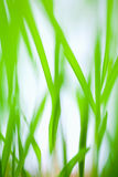 Grass blades abstract. View with shallow dof stock images