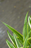 Grass blades closeup Royalty Free Stock Image