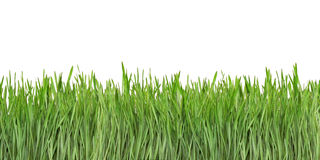Blades Of Grass Background - Free Stock Images & Photos ...