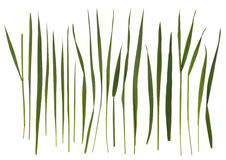 Grass blades isolated on white. Background royalty free stock image