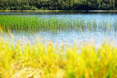 Grass blades in Norway lake bokeh background Stock Photography