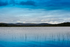 Grass blades in Norway lake landscape background Stock Image