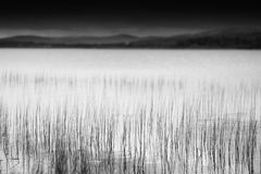 Grass blades in Norway lake landscape background Royalty Free Stock Photography