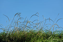 Grass blades over blue sky Royalty Free Stock Photography
