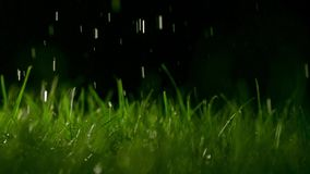 Grass blades and pouring water at night, shallow focus. Super slow motion footage, 500 fps, dark background stock video
