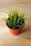 Grass blades Vase Stock Image