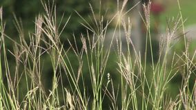 Grass blowing in the wind Royalty Free Stock Photography