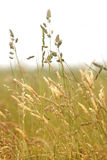 Grass blowing in the wind Royalty Free Stock Photos