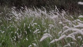 Grass blowing in the wind. On the prairie stock video footage