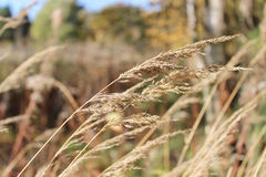 Grass blowing in the wind Stock Photos