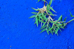 Grass on blue concrete Royalty Free Stock Photography