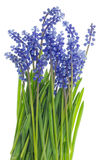 grass and blue flowers Royalty Free Stock Photos