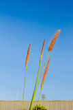Grass and blue skies. Stock Photo