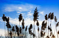 Grass and blue sky Royalty Free Stock Photo