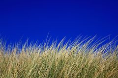 Grass with Blue Sky. Grass swaying in the wind on the beach with deep blue sky Stock Images
