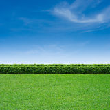 Grass and blue sky. Green grass and summer blue sky royalty free stock photo